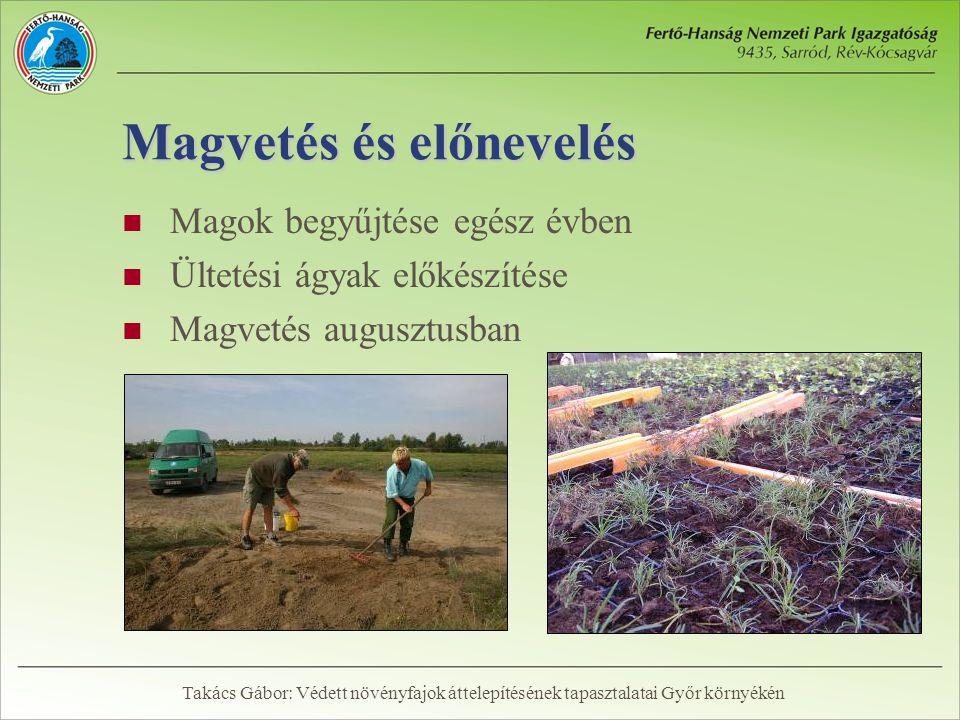 Magvetés és előnevelés  Magok begyűjtése egész évben  Ültetési ágyak előkészítése  Magvetés augusztusban Takács Gábor: Védett növényfajok áttelepítésének tapasztalatai Győr környékén