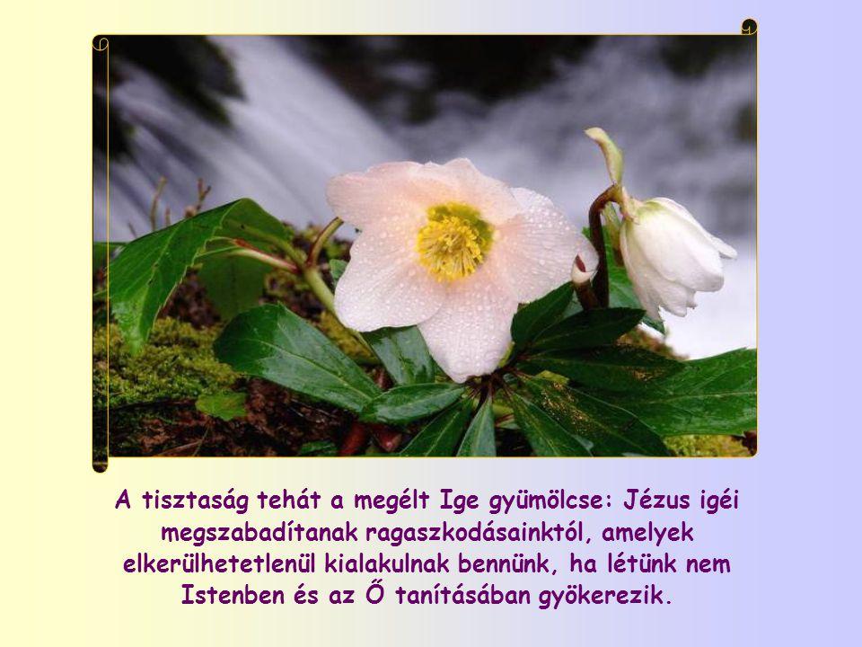 Benne ugyanaz a Krisztus van jelen, aki jelen van az Eucharisztiában, bár más módon. Az Ige révén Krisztust fogadjuk magunkba, s ha engedjük őt cselek
