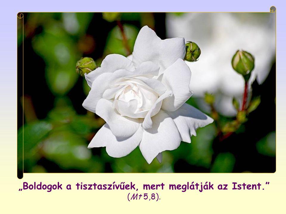 """""""Boldogok a tisztaszívűek, mert meglátják az Istent. (Mt 5,8)."""