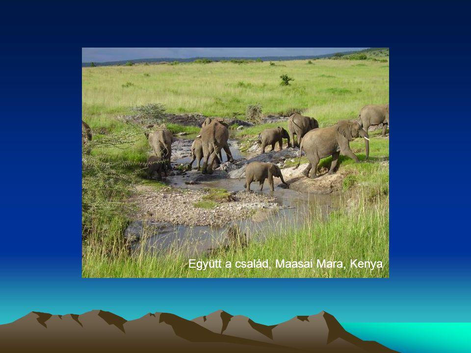 Együtt a család, Maasai Mara, Kenya