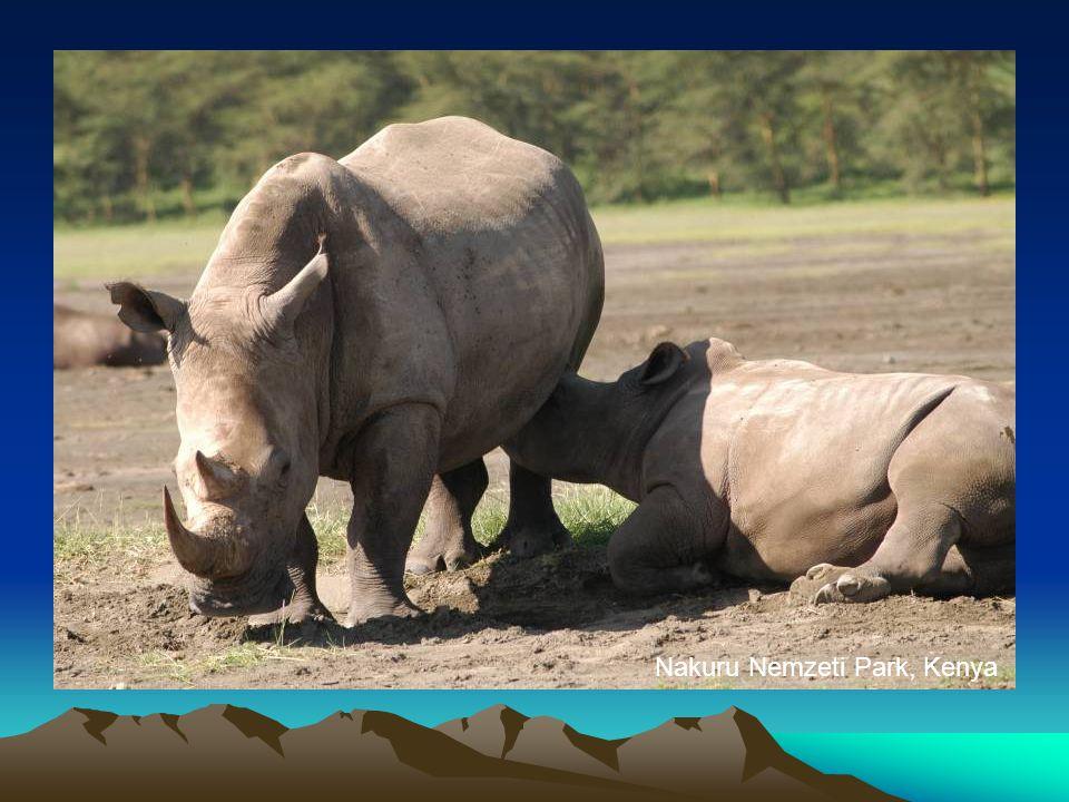 Nakuru Nemzeti Park, Kenya