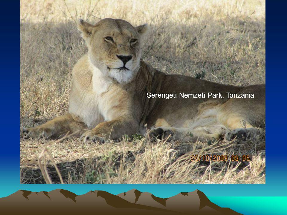 Serengeti Nemzeti Park, Tanzánia