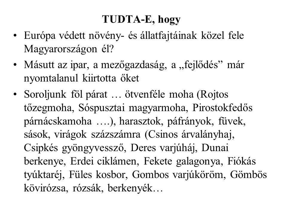 """TUDTA-E, hogy •Európa védett növény- és állatfajtáinak közel fele Magyarországon él? •Másutt az ipar, a mezőgazdaság, a """"fejlődés"""" már nyomtalanul kii"""