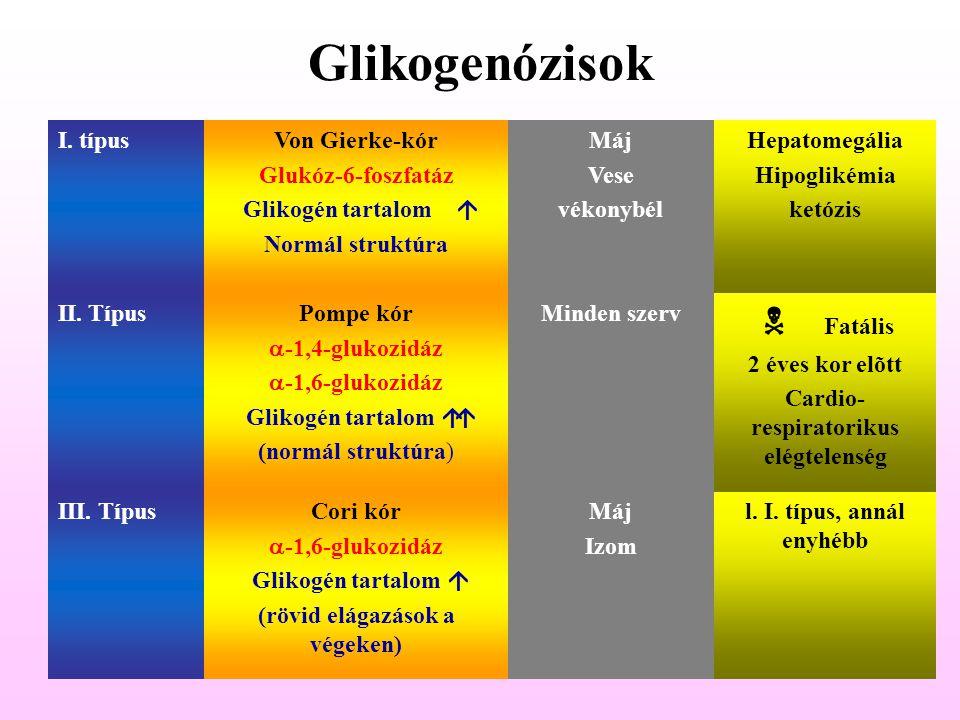 Glikogenózisok I. típusVon Gierke-kór Glukóz-6-foszfatáz Glikogén tartalom  Normál struktúra Máj Vese vékonybél Hepatomegália Hipoglikémia ketózis I