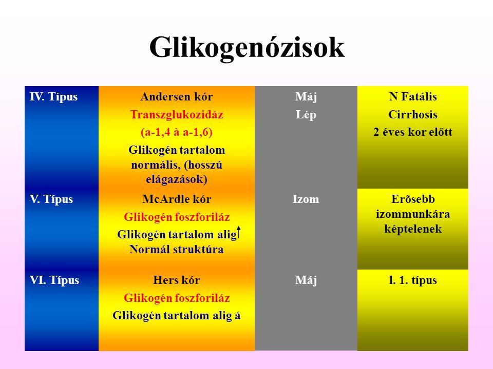 Glikogenózisok IV. TípusAndersen kór Transzglukozidáz (a-1,4 à a-1,6) Glikogén tartalom normális, (hosszú elágazások) Máj Lép N Fatális Cirrhosis 2 év