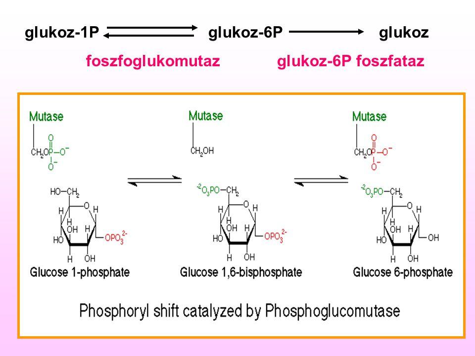 glukoz-1P glukoz-6P glukoz foszfoglukomutaz glukoz-6P foszfataz