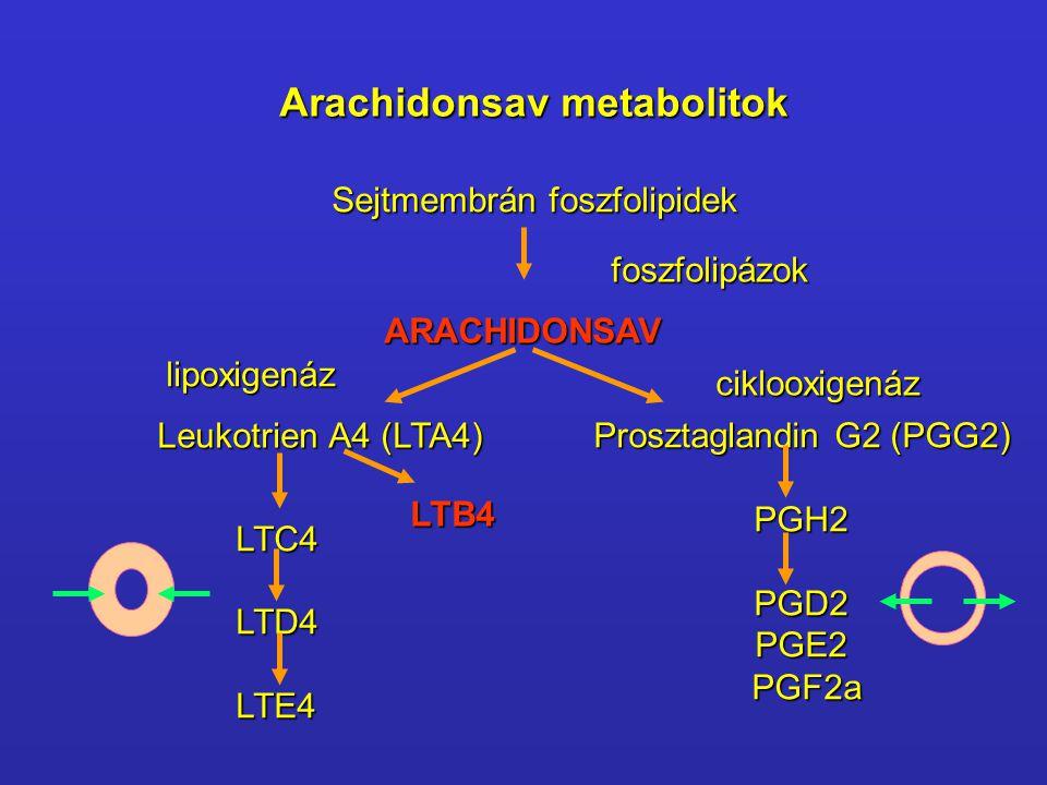 Arachidonsav metabolitok Sejtmembrán foszfolipidek ARACHIDONSAV Leukotrien A4 (LTA4) LTC4LTD4LTE4 LTB4 foszfolipázok lipoxigenáz ciklooxigenáz Proszta