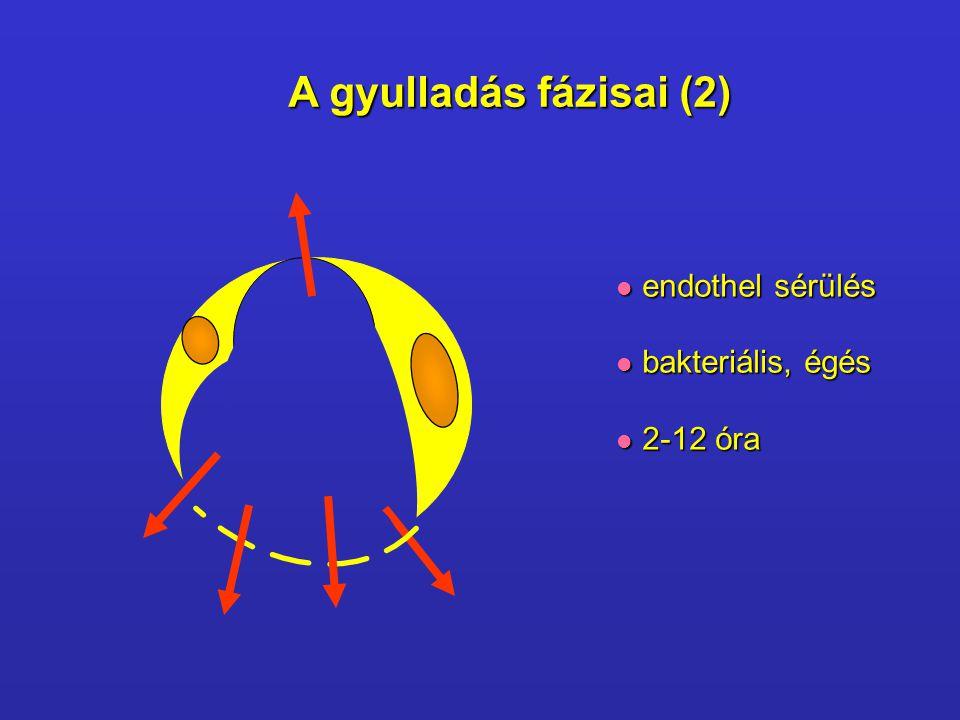 M M M M M M M M U U U TNF Neutrofil-dependens Endothel-dependens IL-1 C5a