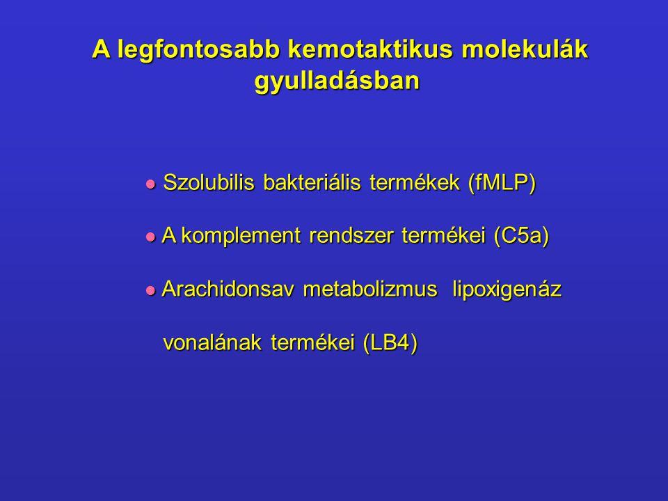 A legfontosabb kemotaktikus molekulák gyulladásban  Szolubilis bakteriális termékek (fMLP)  A komplement rendszer termékei (C5a)  Arachidonsav meta