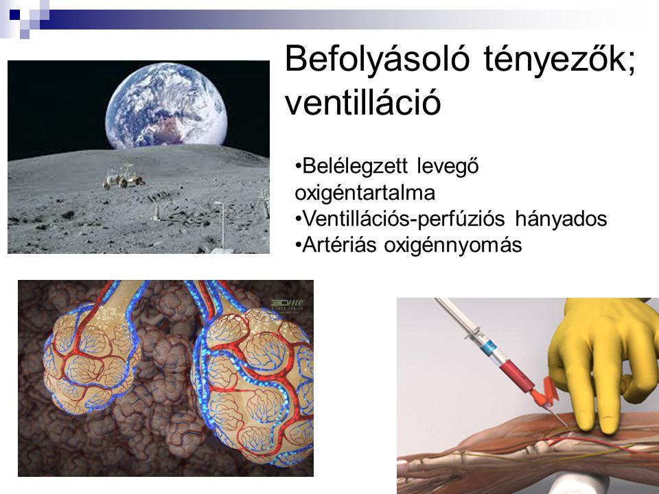 Befolyásoló tényezők; ventilláció •Belélegzett levegő oxigéntartalma •Ventillációs-perfúziós hányados •Artériás oxigénnyomás