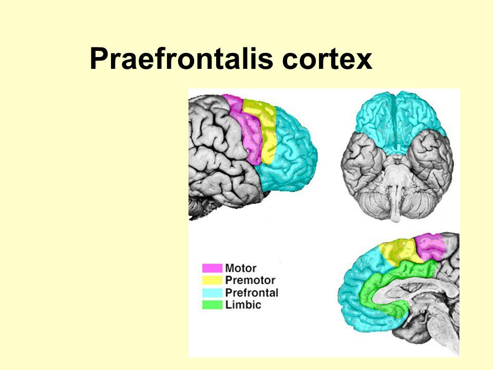 Praefrontalis cortex