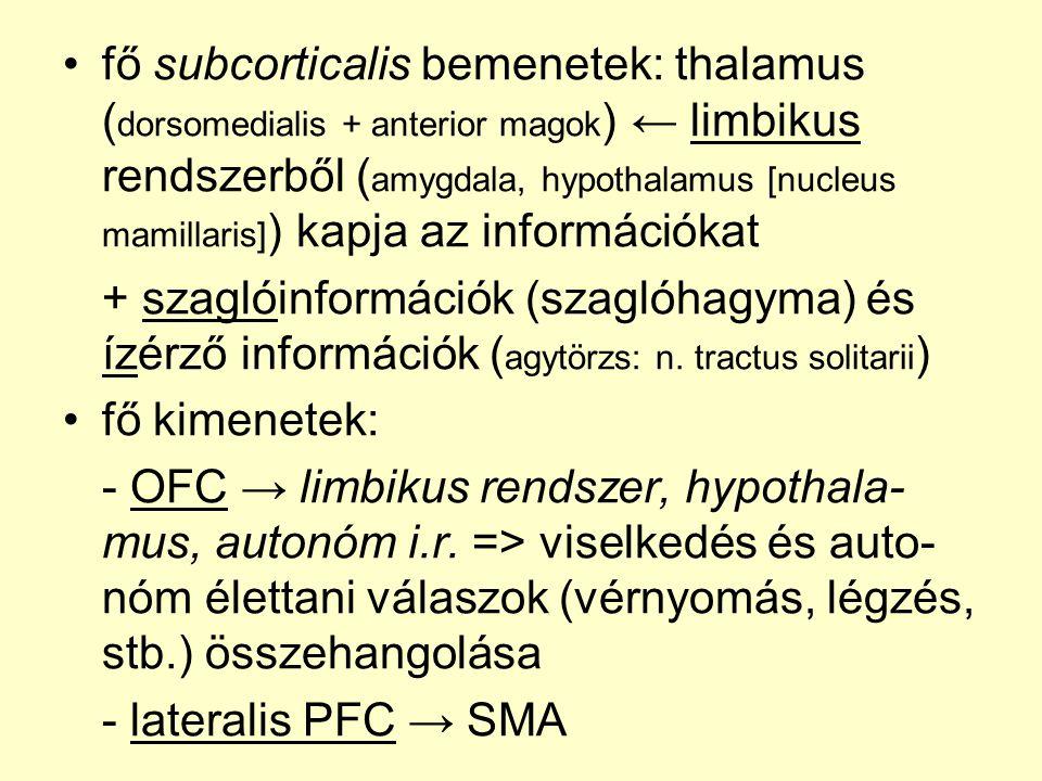 •fő subcorticalis bemenetek: thalamus ( dorsomedialis + anterior magok ) ← limbikus rendszerből ( amygdala, hypothalamus [nucleus mamillaris] ) kapja az információkat + szaglóinformációk (szaglóhagyma) és ízérző információk ( agytörzs: n.