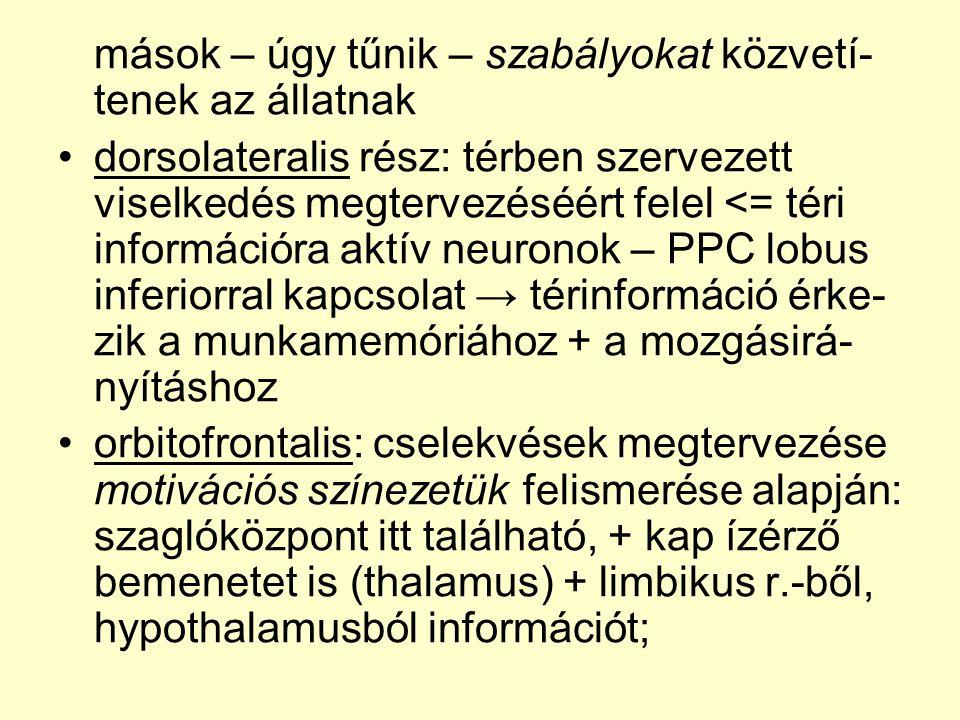 mások – úgy tűnik – szabályokat közvetí- tenek az állatnak •dorsolateralis rész: térben szervezett viselkedés megtervezéséért felel <= téri információra aktív neuronok – PPC lobus inferiorral kapcsolat → térinformáció érke- zik a munkamemóriához + a mozgásirá- nyításhoz •orbitofrontalis: cselekvések megtervezése motivációs színezetük felismerése alapján: szaglóközpont itt található, + kap ízérző bemenetet is (thalamus) + limbikus r.-ből, hypothalamusból információt;