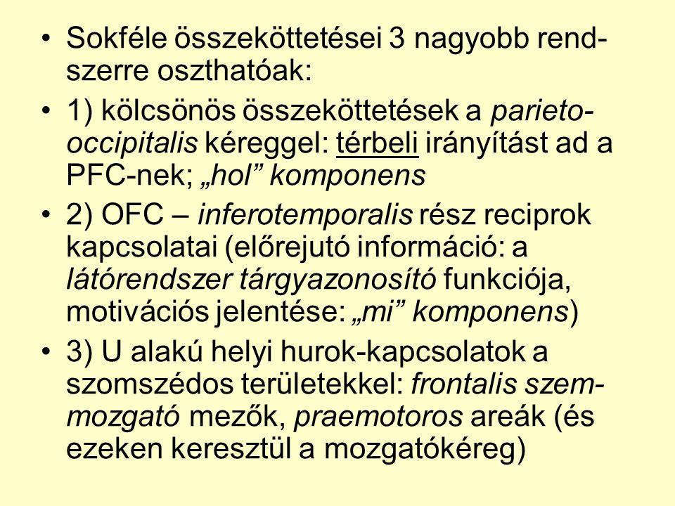 """•Sokféle összeköttetései 3 nagyobb rend- szerre oszthatóak: •1) kölcsönös összeköttetések a parieto- occipitalis kéreggel: térbeli irányítást ad a PFC-nek; """"hol komponens •2) OFC – inferotemporalis rész reciprok kapcsolatai (előrejutó információ: a látórendszer tárgyazonosító funkciója, motivációs jelentése: """"mi komponens) •3) U alakú helyi hurok-kapcsolatok a szomszédos területekkel: frontalis szem- mozgató mezők, praemotoros areák (és ezeken keresztül a mozgatókéreg)"""