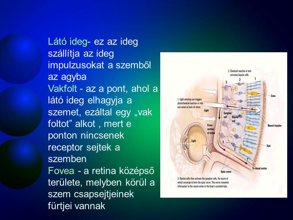 Receptorok az emberi szemben CsapokPálcikák Száma Elhelyezkedésük a retinán Érzékenységük gyenge megvilágításban Szín érzékenység?Igen Gyenge Középen