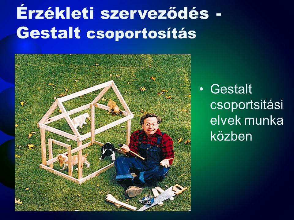 Érzékleti szerveződés- Gestalt •Gestalt- szervezett egész –Az a hajlam, hogy a részinformációkból jelentés teli egész szerveződjön •Csoportosítási elv