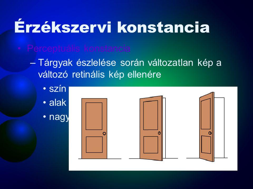 Alakállandóság •Ha egyenesen szemben állunk egy ajtóval, annak képe a retinán téglalap alakú. Amint kinyitjuk az ajtót, a kép trapézzá változik és vég
