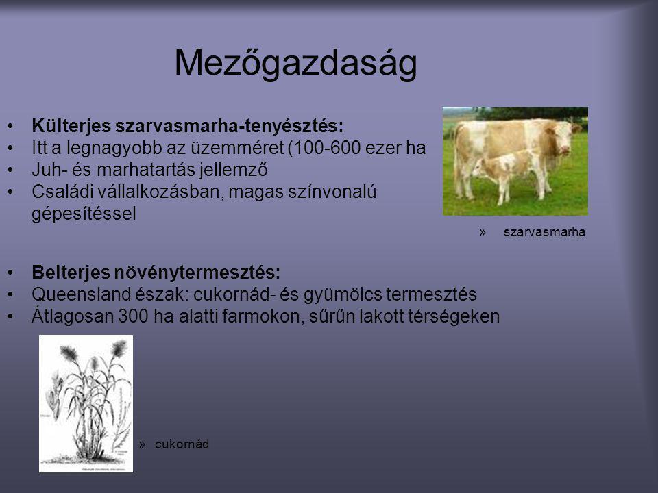 Mezőgazdaság •Külterjes szarvasmarha-tenyésztés: •Itt a legnagyobb az üzemméret (100-600 ezer ha •Juh- és marhatartás jellemző •Családi vállalkozásban