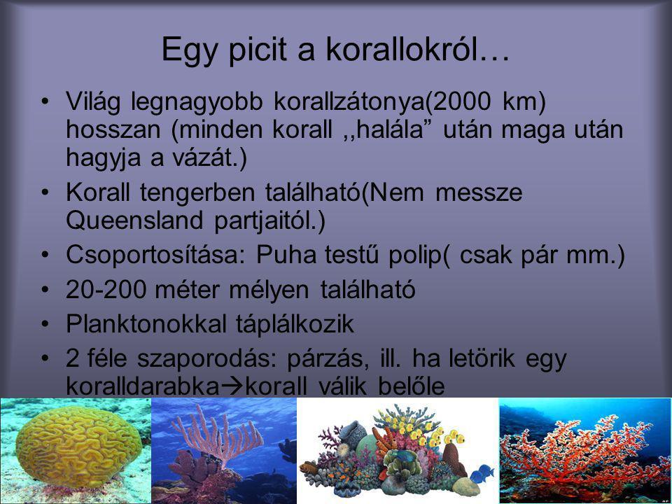 """Egy picit a korallokról… •Világ legnagyobb korallzátonya(2000 km) hosszan (minden korall,,halála"""" után maga után hagyja a vázát.) •Korall tengerben ta"""