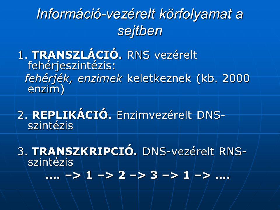 Információ-vezérelt körfolyamat a sejtben 1.TRANSZLÁCIÓ.