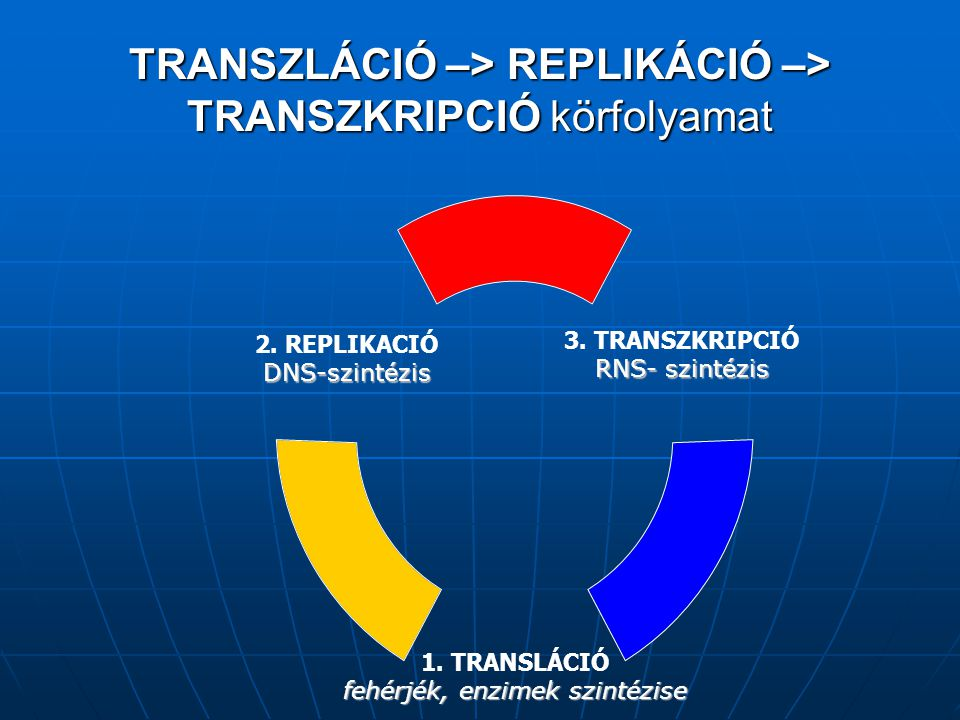 TRANSZLÁCIÓ –> REPLIKÁCIÓ –> TRANSZKRIPCIÓ körfolyamat 3.