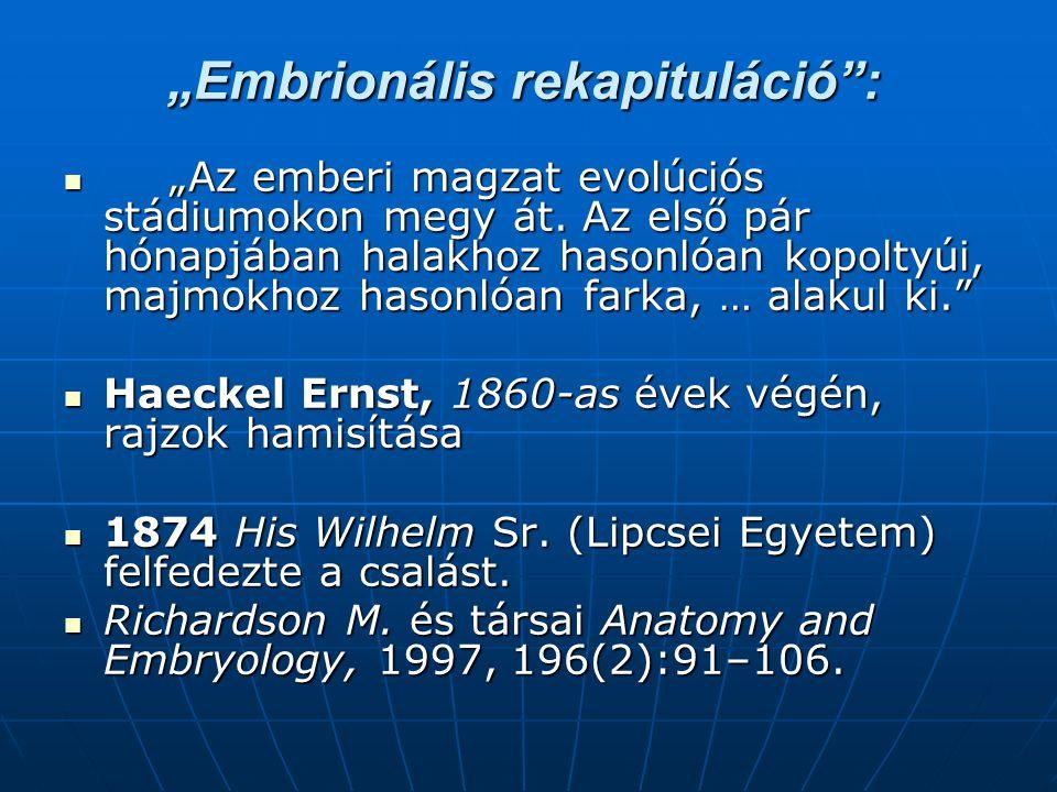 """""""Embrionális rekapituláció :  """"Az emberi magzat evolúciós stádiumokon megy át."""
