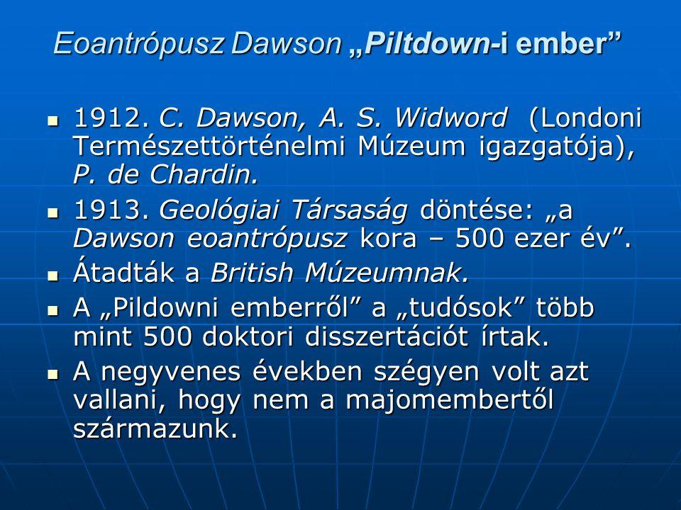 "Eoantrópusz Dawson ""Piltdown-i ember  1912.C. Dawson, A."