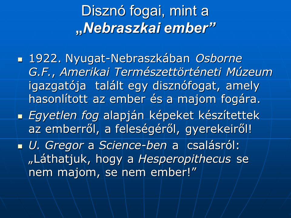 """Disznó fogai, mint a """"Nebraszkai ember  1922."""