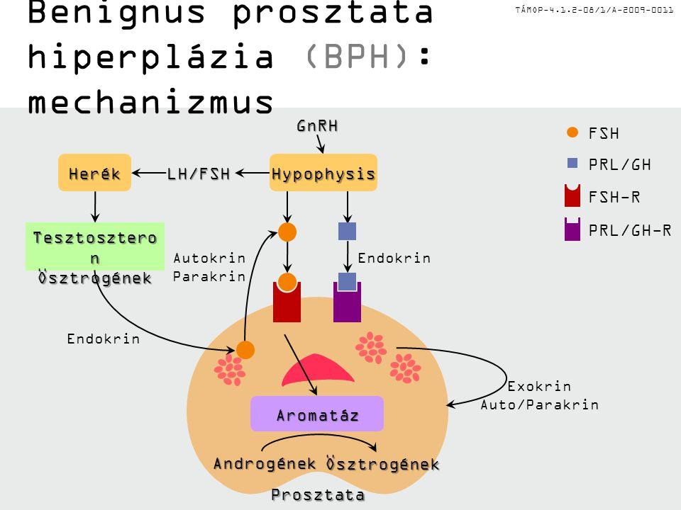 TÁMOP-4.1.2-08/1/A-2009-0011GnRH Tesztosztero n Ösztrogének LH/FSH HerékHypophysis Endokrin Exokrin Auto/Parakrin FSH PRL/GH FSH-RPRL/GH-R Benignus pr