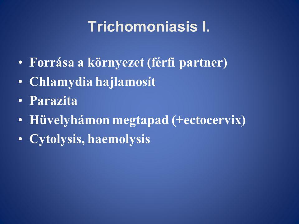 Trichomoniasis I. •Forrása a környezet (férfi partner) •Chlamydia hajlamosít •Parazita •Hüvelyhámon megtapad (+ectocervix) •Cytolysis, haemolysis