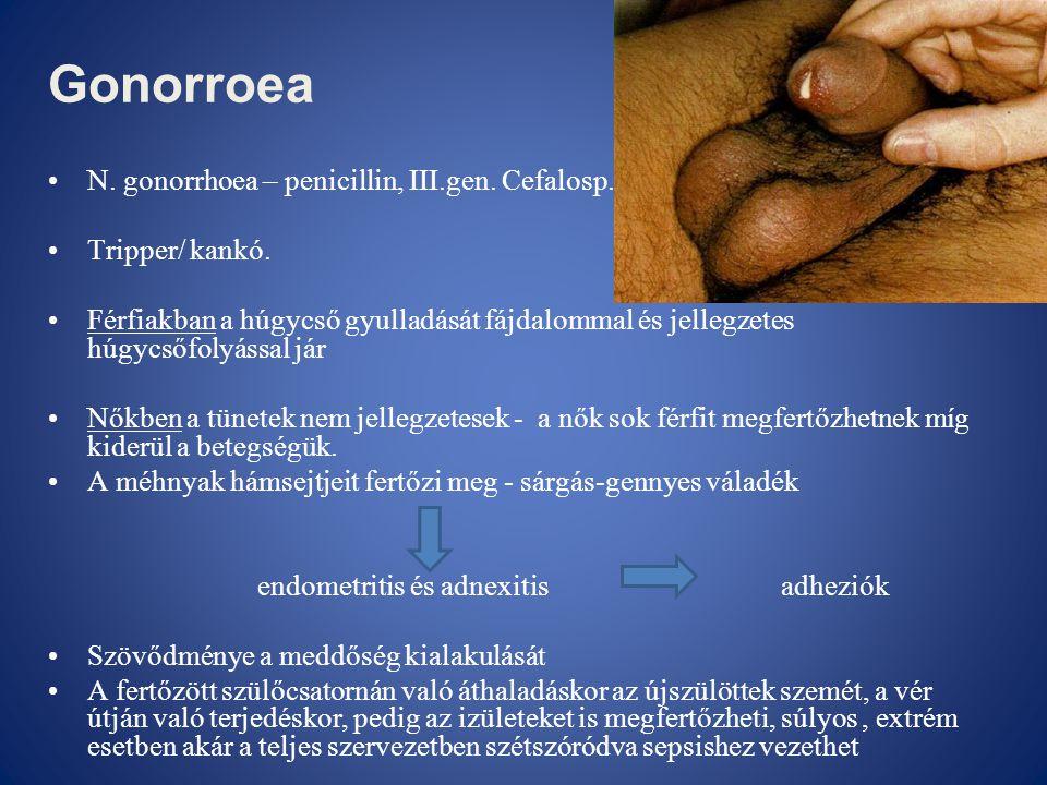 Gonorroea •N. gonorrhoea – penicillin, III.gen. Cefalosp. •Tripper/ kankó. •Férfiakban a húgycső gyulladását fájdalommal és jellegzetes húgycsőfolyáss