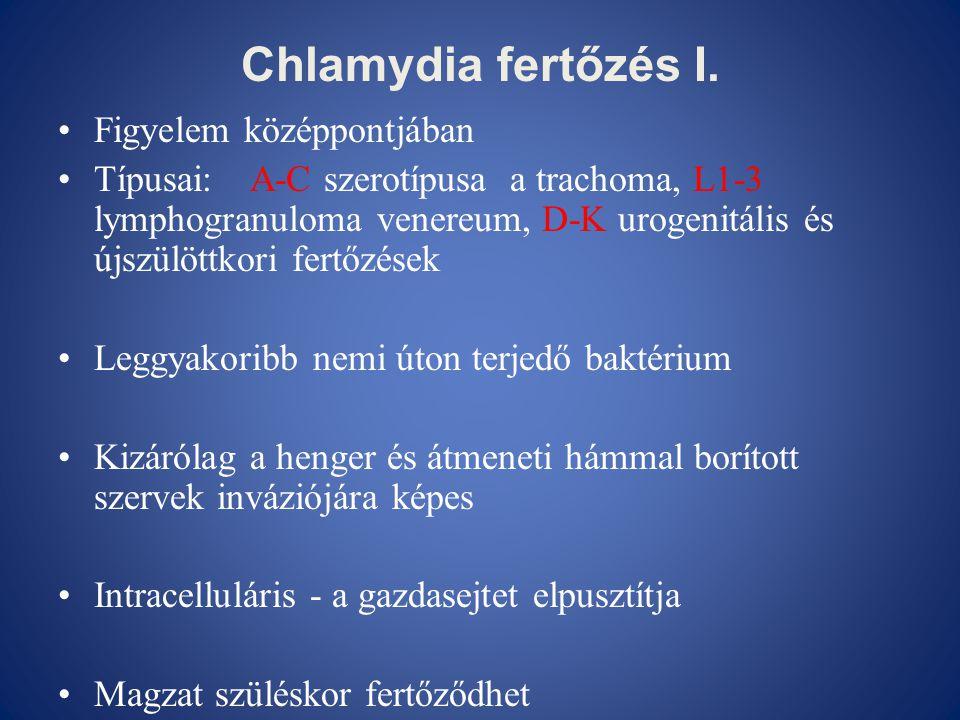 Chlamydia fertőzés I. •Figyelem középpontjában •Típusai: A-C szerotípusa a trachoma, L1-3 lymphogranuloma venereum, D-K urogenitális és újszülöttkori
