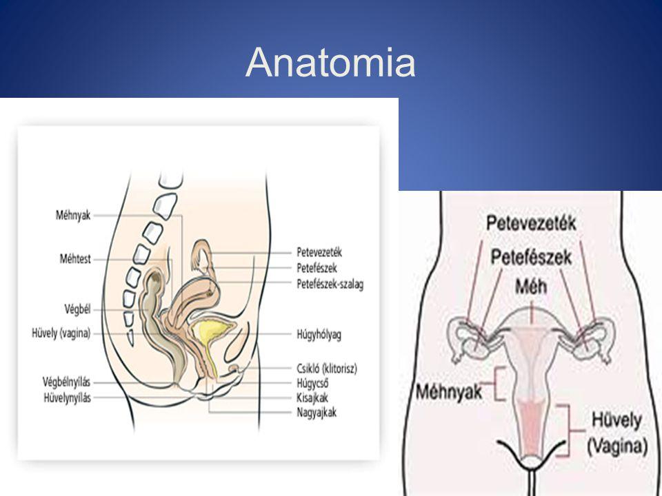 Rizikótényezők (RR) •Obesitas 3X •Oestrogen (kiegyensúlyozatlan) 4-15X •Nulliparitas (2X) •Késői menopausa (52 év) (2.5X) •Hypertensio (1.5X) •Diabetes (3X)