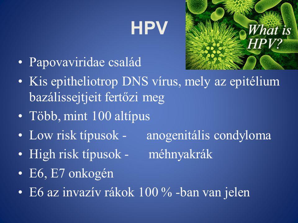 HPV •Papovaviridae család •Kis epitheliotrop DNS vírus, mely az epitélium bazálissejtjeit fertőzi meg •Több, mint 100 altípus •Low risk típusok - anog