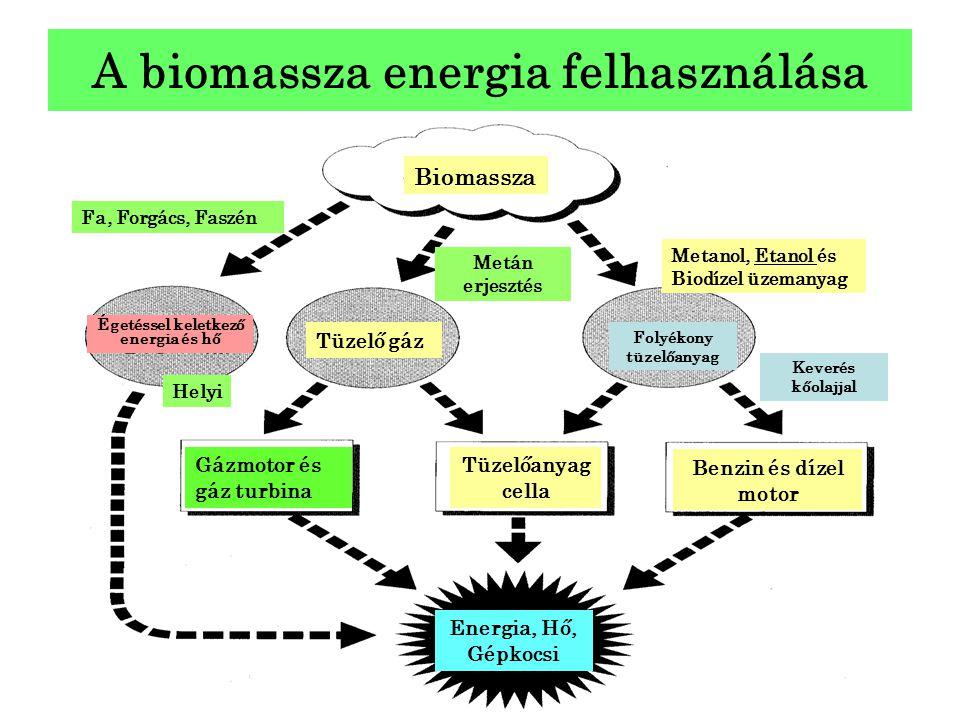 A biomassza energia felhasználása Biomassza Égetéssel keletkező energia és hő Tüzelő gáz Folyékony tüzelőanyag Gázmotor és gáz turbina Tüzelőanyag cel