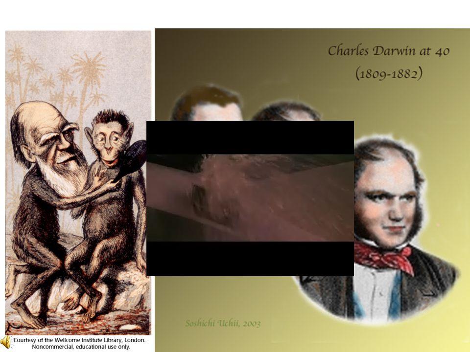 5. A II. ipari forradalom Fontosabb találmányok: Telefon (Bell) közlekedés: Zeppelin (1900) vs. Wright (1903) Tudományos világkép Darwin – evolúciós e