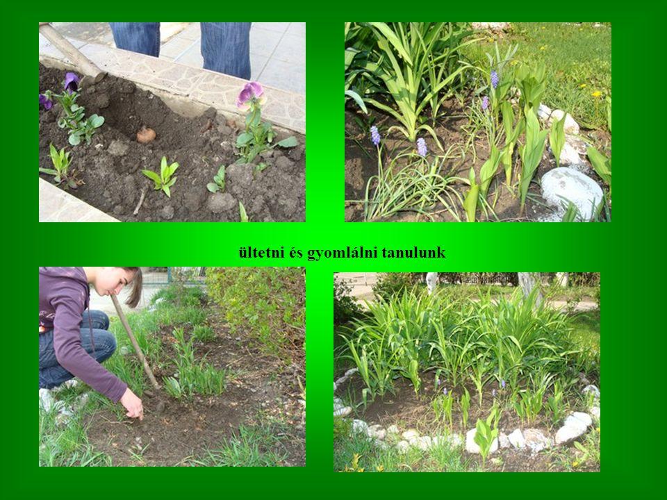 ültetni és gyomlálni tanulunk