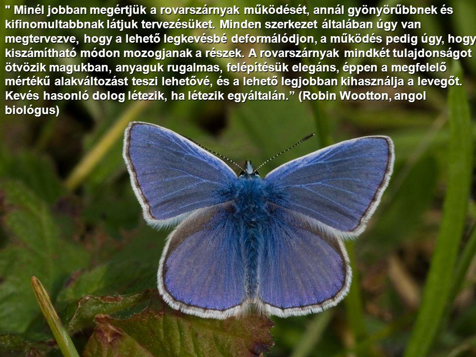 Minél jobban megértjük a rovarszárnyak működését, annál gyönyörűbbnek és kifinomultabbnak látjuk tervezésüket.