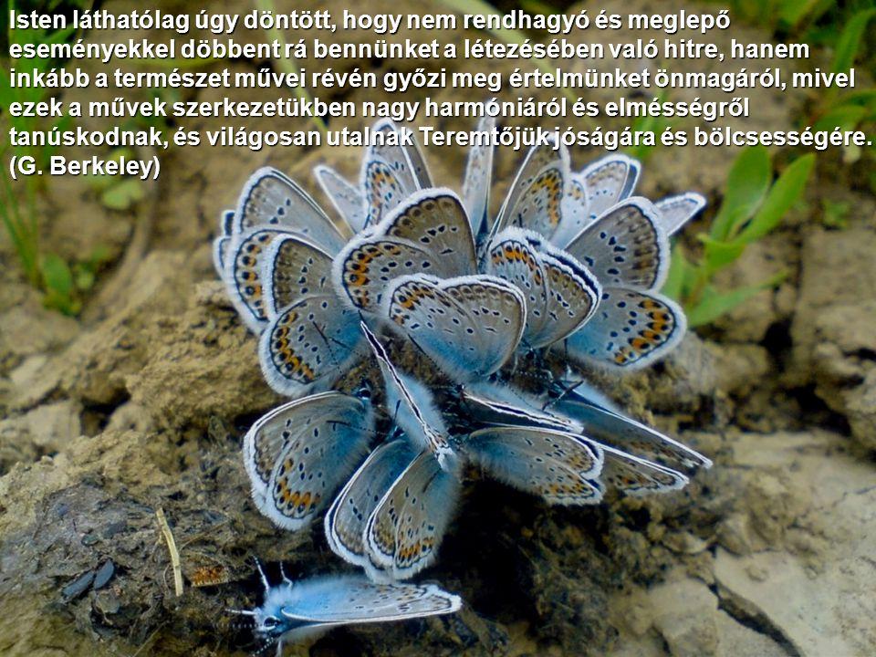 Isten láthatólag úgy döntött, hogy nem rendhagyó és meglepő eseményekkel döbbent rá bennünket a létezésében való hitre, hanem inkább a természet művei