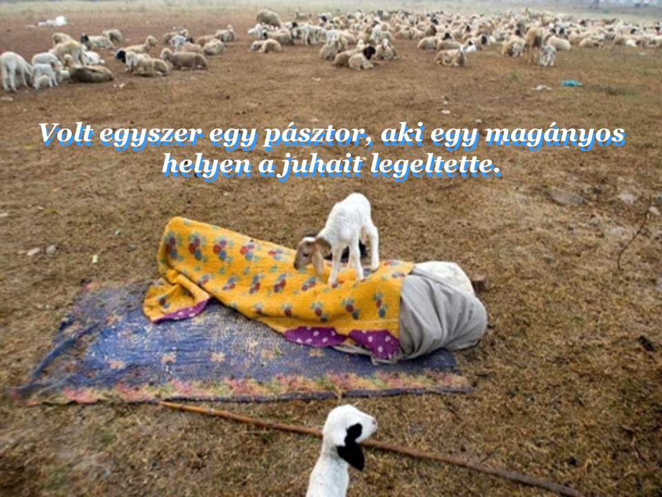 Volt egyszer egy pásztor, aki egy magányos helyen a juhait legeltette.