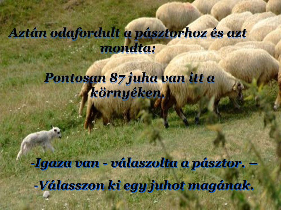 Aztán odafordult a pásztorhoz és azt mondta: Pontosan 87 juha van itt a környéken.