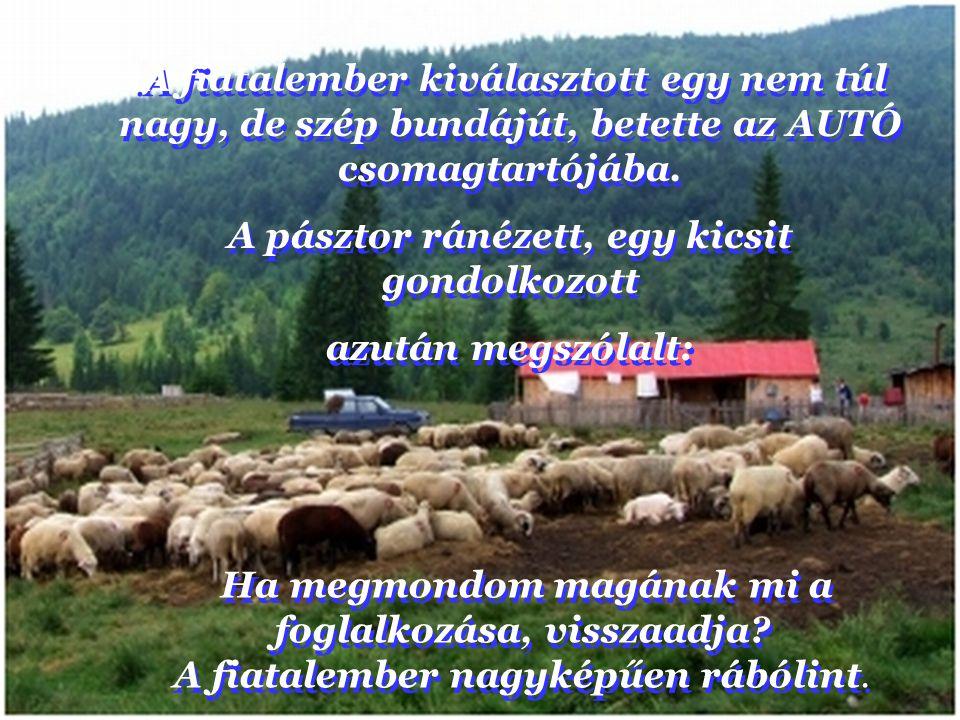 Aztán odafordult a pásztorhoz és azt mondta: Pontosan 87 juha van itt a környéken. Aztán odafordult a pásztorhoz és azt mondta: Pontosan 87 juha van i