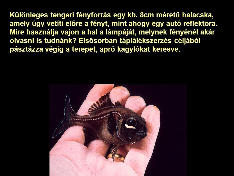 Világító polip és medúza