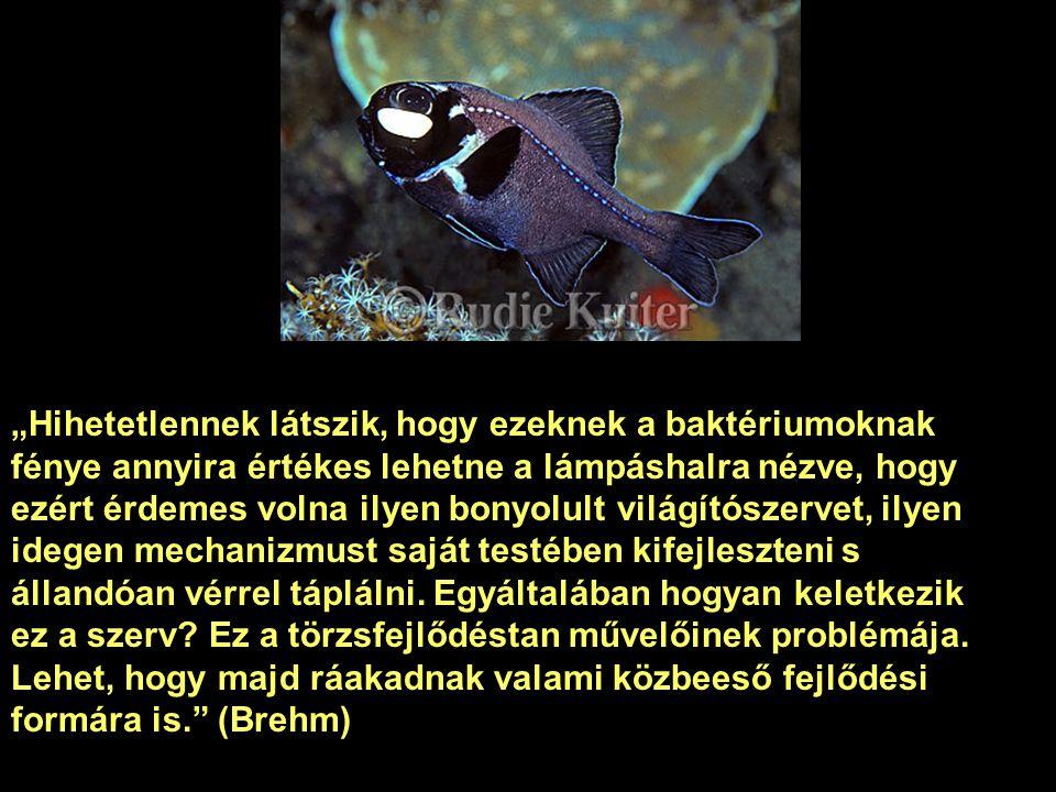Ez a kis hal, és a többi világító élőlény is hideg fényt használ, hiszen ha felmelegednének, az a pusztulásukat jelentené. A jelenséghez különböző any