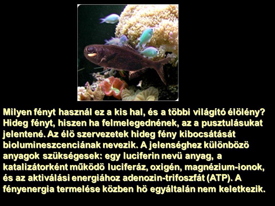 Milyen fényt használ ez a kis hal, és a többi világító élölény? Hideg fényt, hiszen ha felmelegednének, az a pusztulásukat jelentené. Az élö szervezet