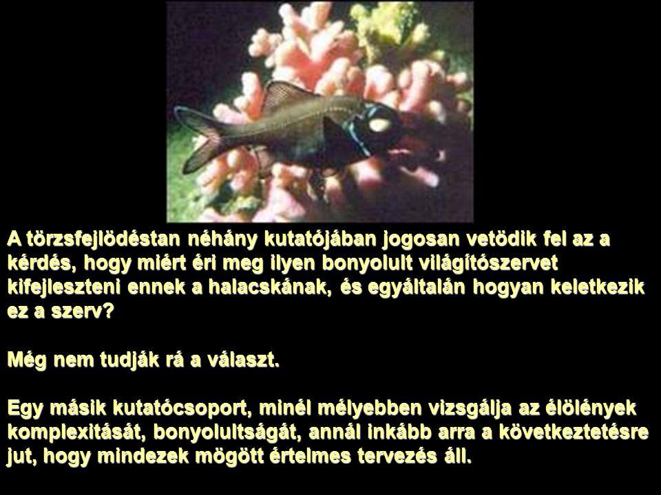 A törzsfejlödéstan néhány kutatójában jogosan vetödik fel az a kérdés, hogy miért éri meg ilyen bonyolult világítószervet kifejleszteni ennek a halacskának, és egyáltalán hogyan keletkezik ez a szerv.