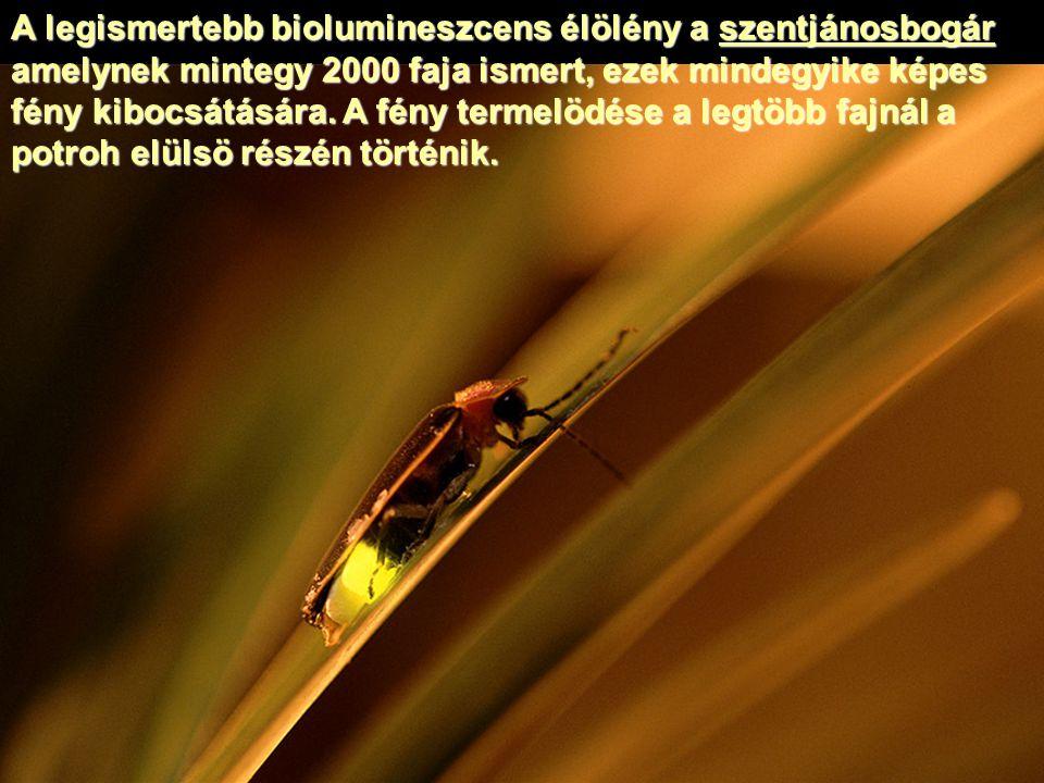 A legismertebb biolumineszcens élölény a szentjánosbogár amelynek mintegy 2000 faja ismert, ezek mindegyike képes fény kibocsátására. A fény termelödé