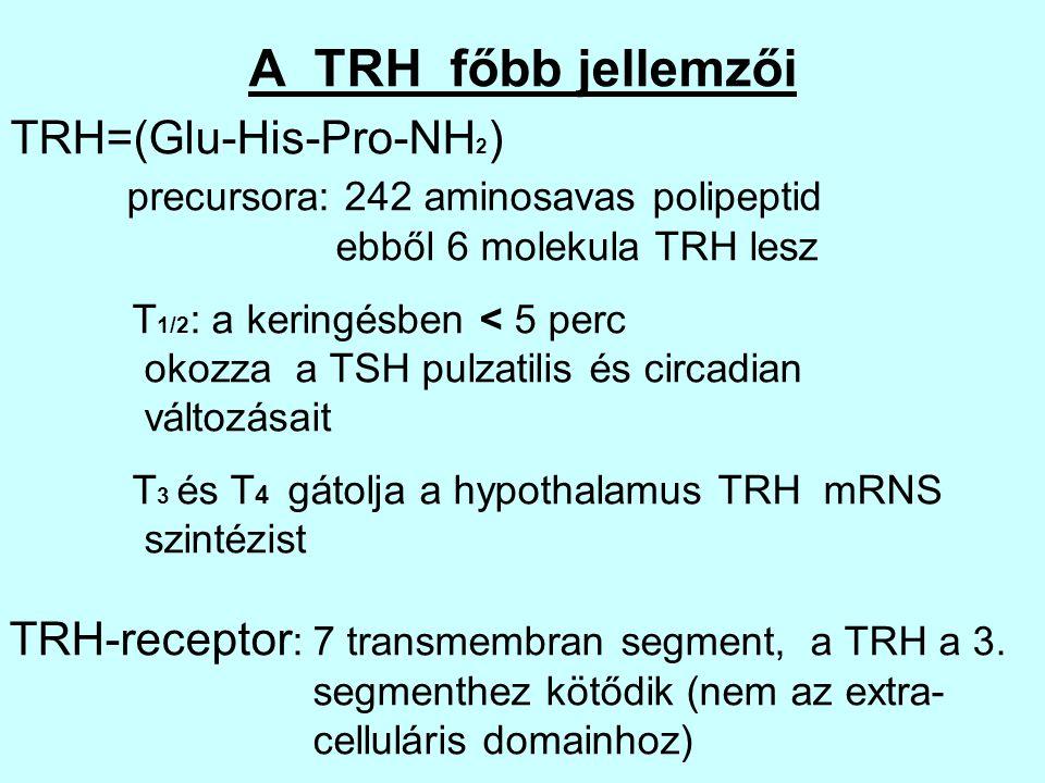 A TRH főbb jellemzői TRH=(Glu-His-Pro-NH 2 ) precursora: 242 aminosavas polipeptid ebből 6 molekula TRH lesz T 1/2 : a keringésben < 5 perc okozza a T