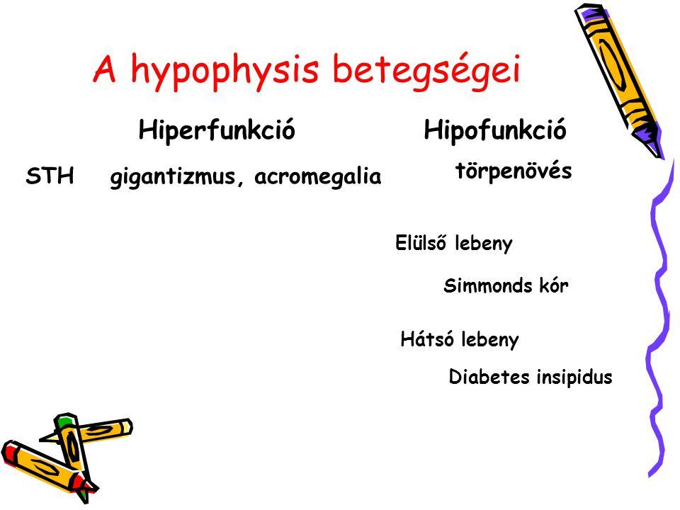 A hypophysis betegségei HiperfunkcióHipofunkció STHgigantizmus, acromegalia törpenövés Elülső lebeny Simmonds kór Hátsó lebeny Diabetes insipidus