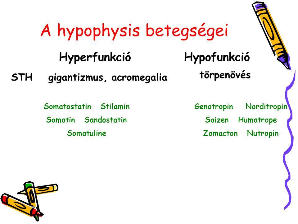 A hypophysis betegségei HyperfunkcióHypofunkció STHgigantizmus, acromegalia törpenövés Somatostatin Stilamin Somatin Sandostatin Somatuline Genotropin Norditropin Saizen Humatrope Zomacton Nutropin